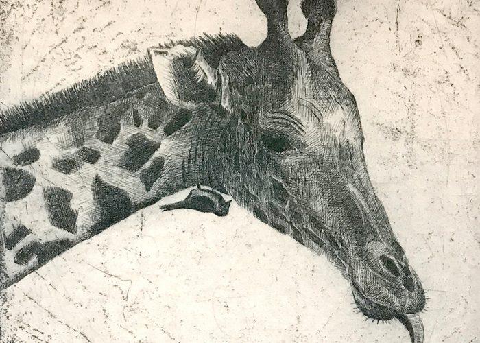 Afrika | Giraffe 2019