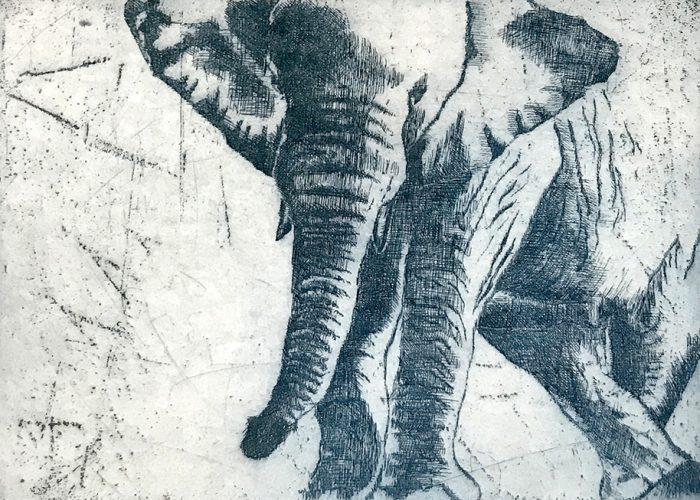Afrika I Elefant 2019